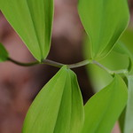 green-leaf.jpg