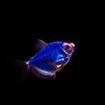 magic-fish.jpg